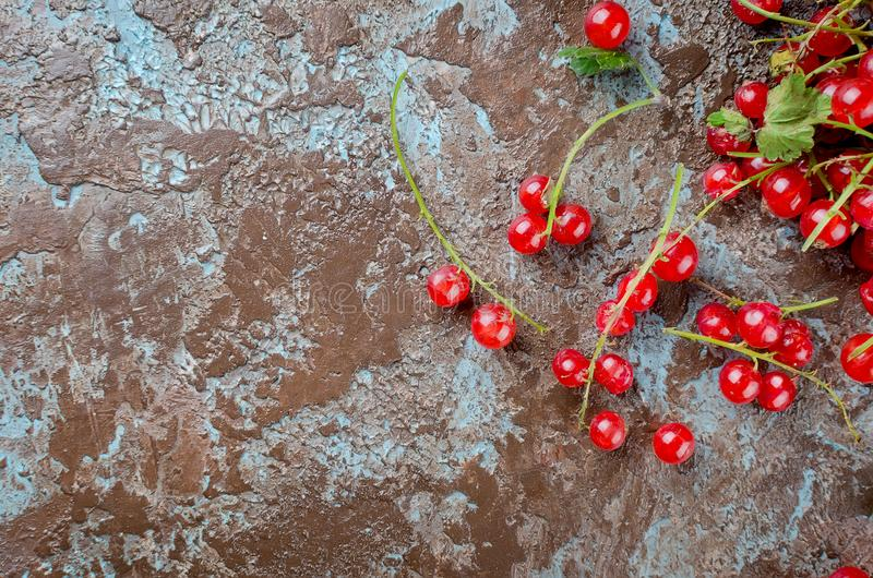 Fresh red currant berries. Ripe fresh red currant berries on dark rustic background top view, copy space royalty free stock photo
