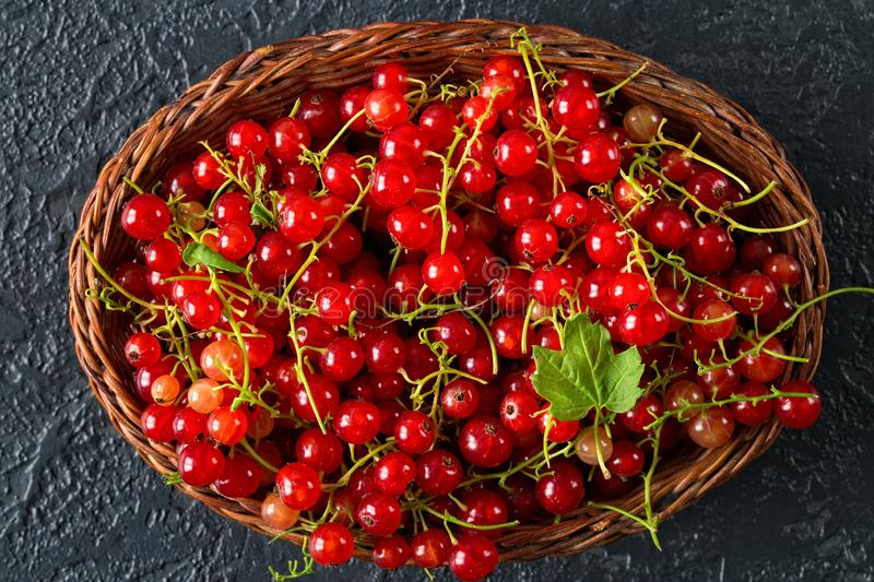 Fresh red currant berries in a wicker basket. Fresh juicy red currant berries in a wicker basket on black stone background. Summer harvest. Healthy eating royalty free stock image