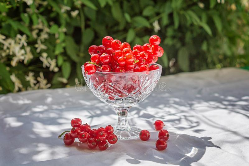 Fresh red currant in a crystal glass stand on a table with a white cloth on the background of blurred flowers. Fresh harvest. Beautiful shadows. Concept of stock photo