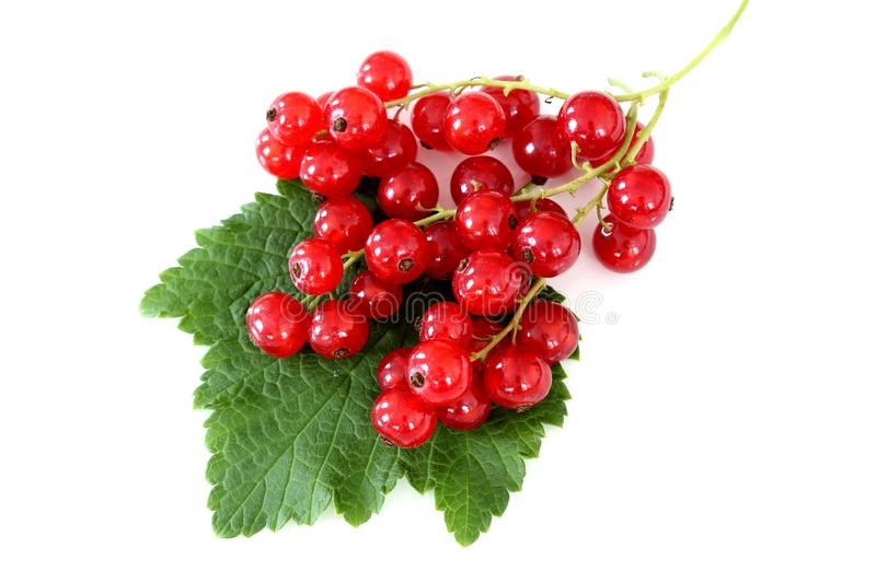 Fresh red currant fruits isolated on a white background royalty free stock photography