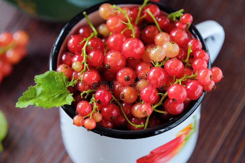 Fresh red currants are tasty and healthy royalty free stock image