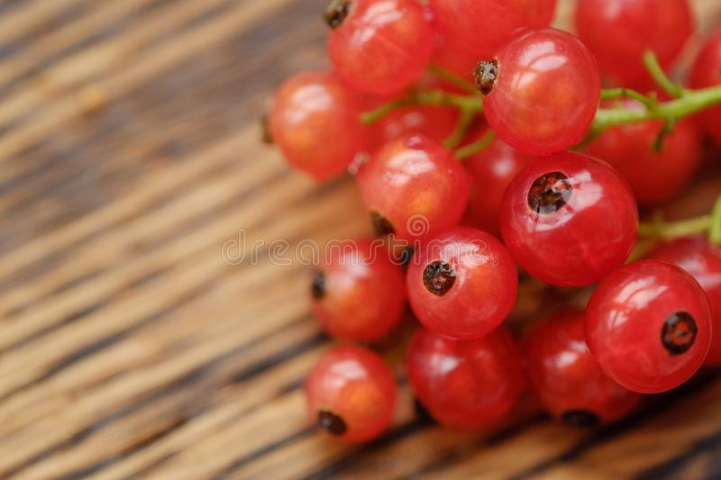 Fresh red currants are tasty and healthy stock photography
