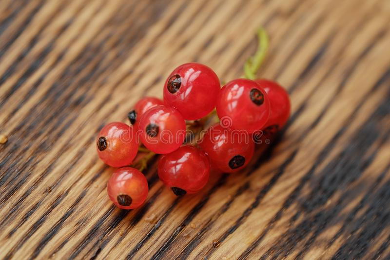 Fresh red currants are tasty and healthy stock photo