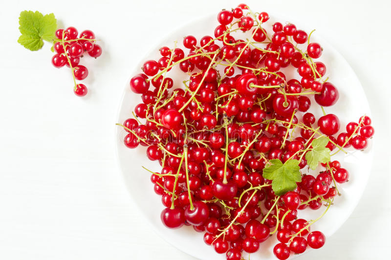 Fresh red currants on a white plate stock photos
