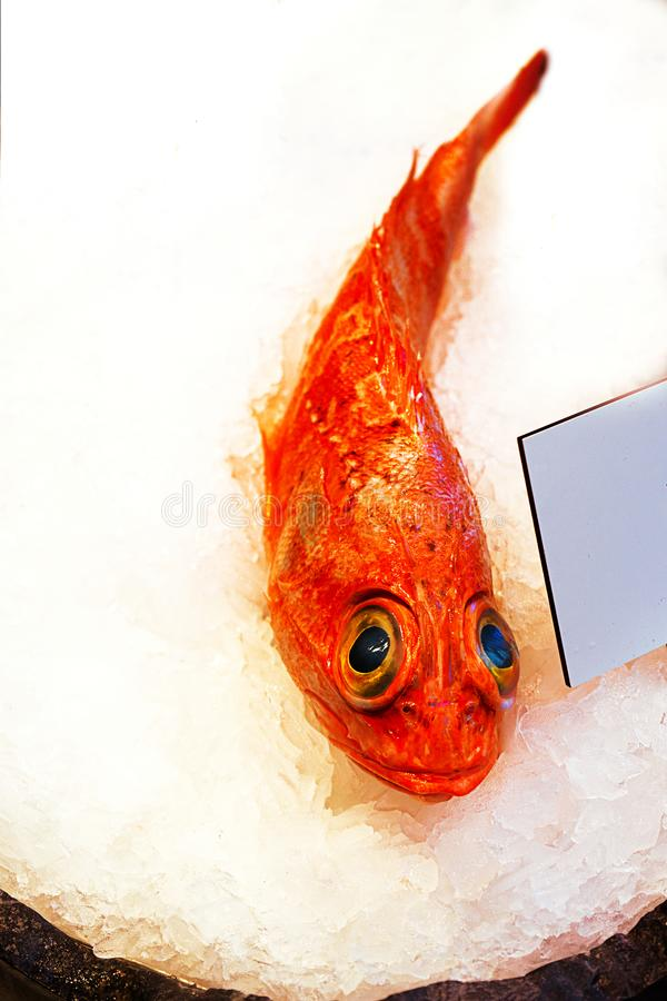 Fresh red fish on the counter in the market. stock image
