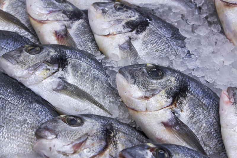 Fresh red fish on ice. royalty free stock image