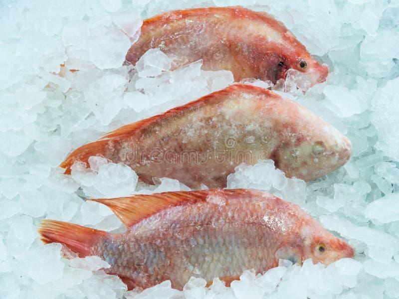 Fresh red fish royalty free stock photos