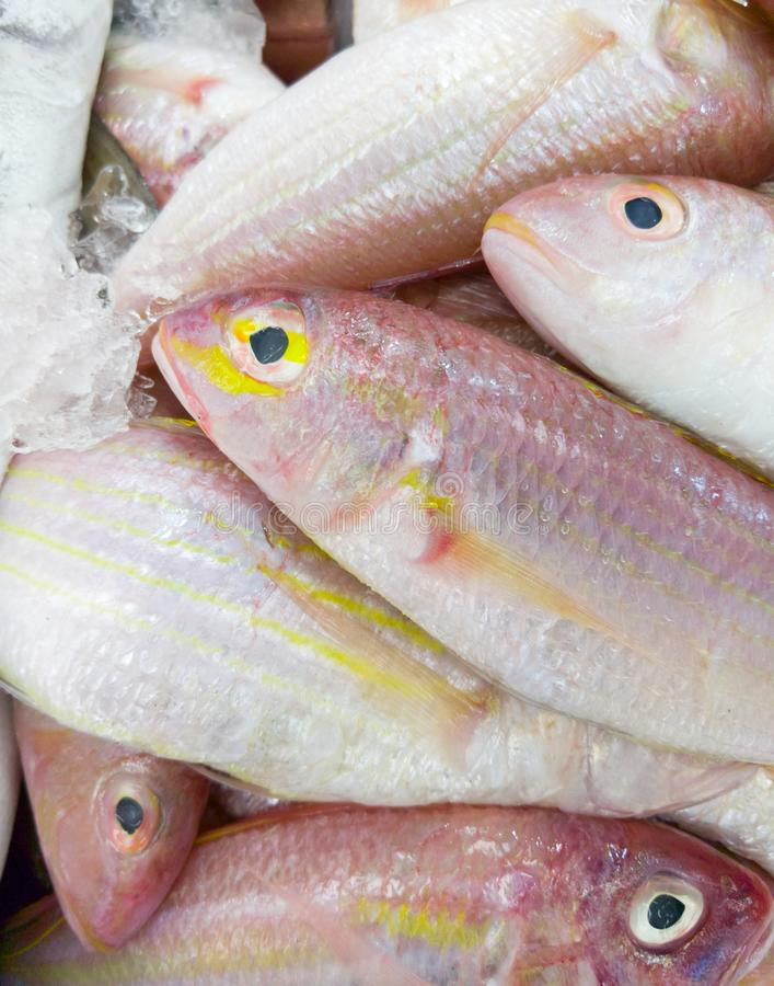 Fresh red fish is stacked in the tray. royalty free stock images