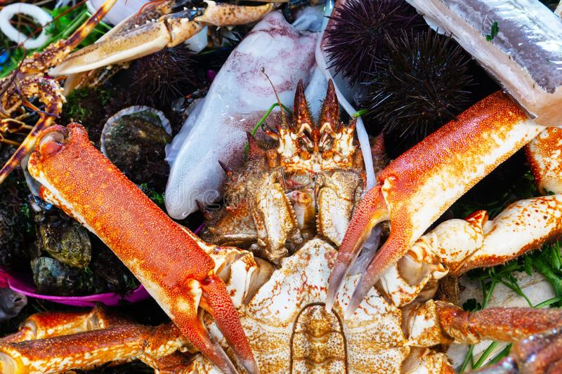 Fresh red giant crab on the counter of the fish market surrounded by seafood sea urchins, squids, oysters, mussels. Close up stock photo