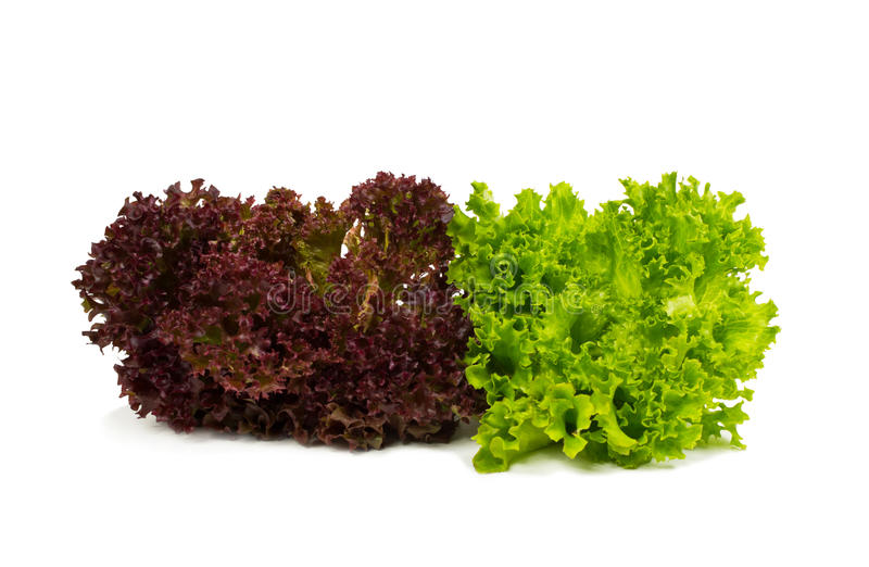 Download Fresh Red And Green Lettuce Royalty Free Stock Photos - Image: 23464468