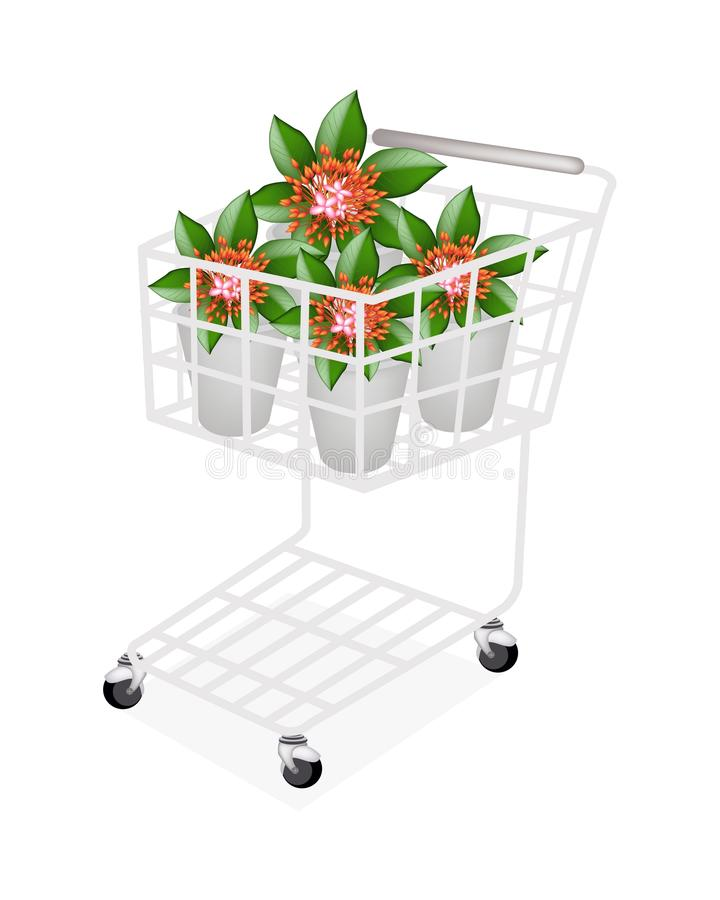 Download Fresh Red Ixora Flowers In A Shopping Cart Stock Photo - Image of leaf, bush: 34571764