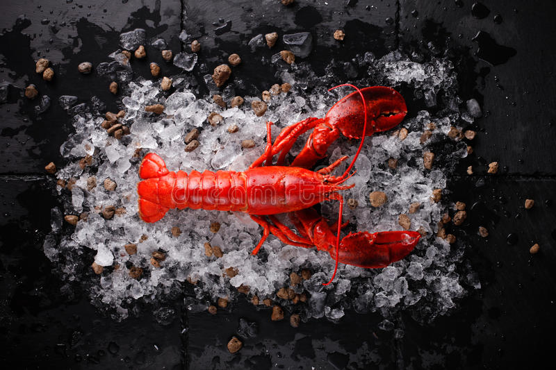 fresh red lobster stock images