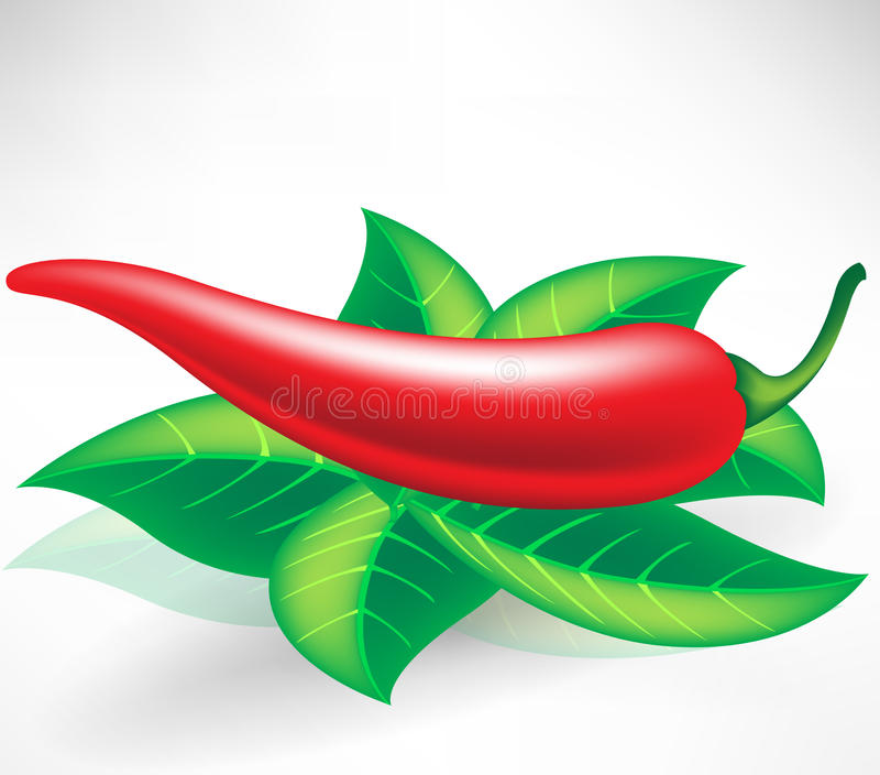 Download Fresh red pepper stock vector. Image of spice, cooking - 21620167
