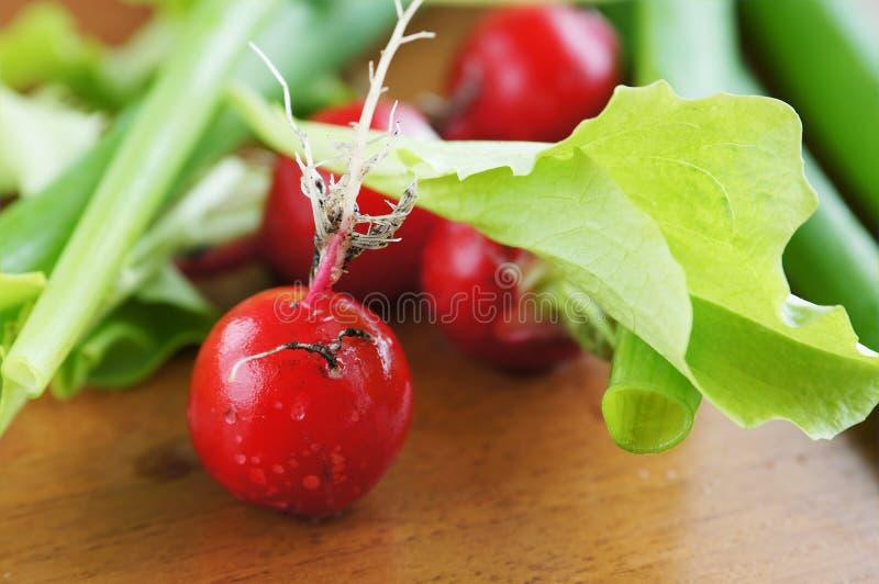 Fresh Red Radish And Salad Leaves Stock Image