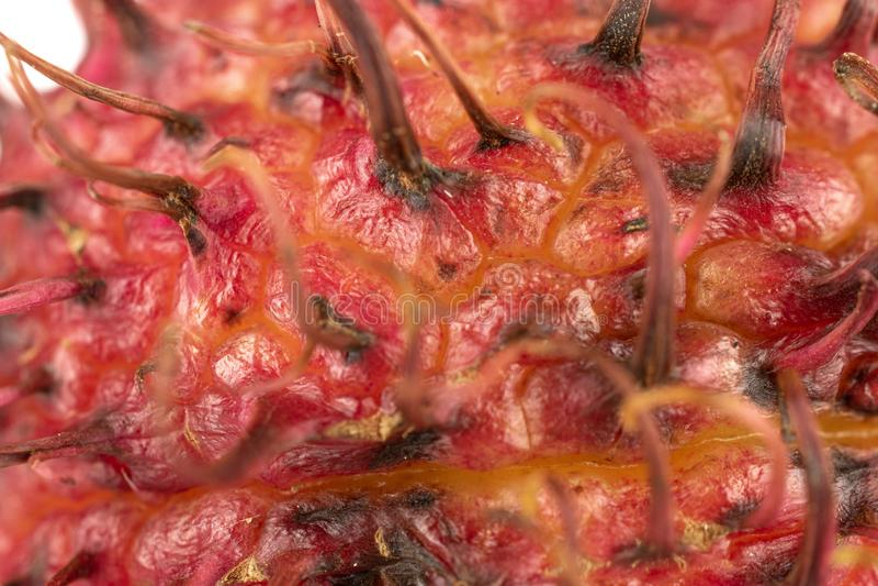 Fresh red rambutan  on white. One whole fresh red rambutan skin macro  on white background stock photo