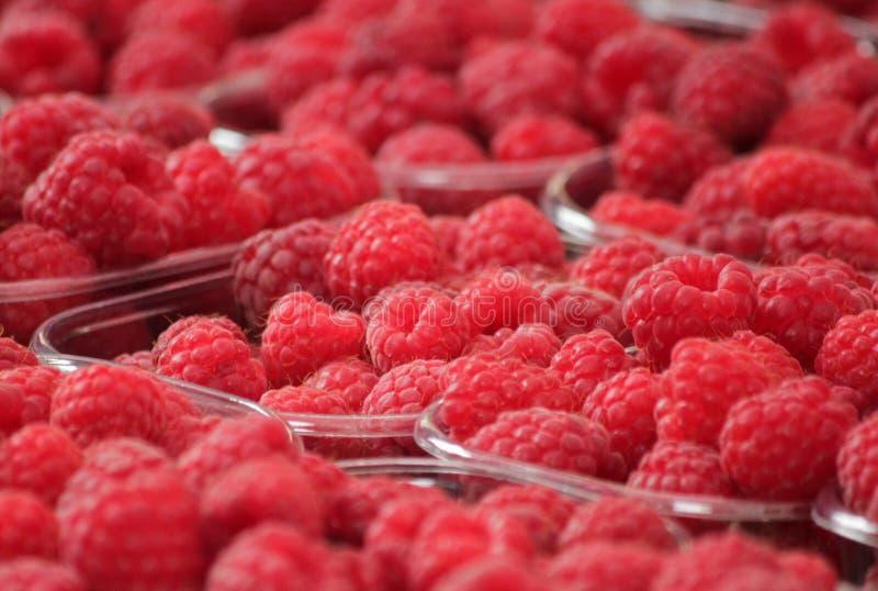 Fresh red raspberries stock photography