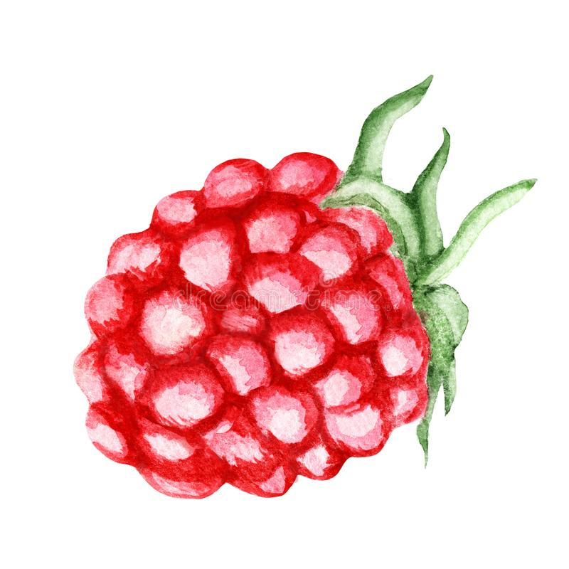 Fresh red Raspberry. Watercolor illustration stock illustration