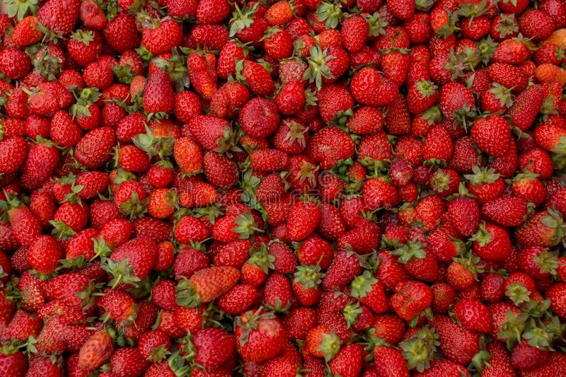 Fresh red ripe organic strawberry on the farmers market. Close-up berry background. Healthy vegan food stock image