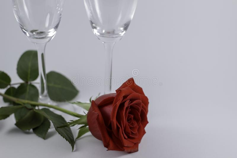 A fresh red rose big bud and petals with green leaves on white background and two champagne glasses stock photos
