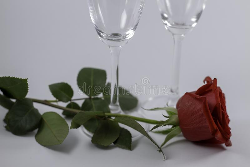 A fresh red rose big bud and petals with green leaves on white background and two champagne glasses royalty free stock image