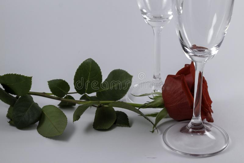 A fresh red rose big bud and petals with green leaves on white background and two champagne glasses royalty free stock photos