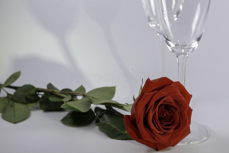 A fresh red rose big bud and petals with green leaves on white background and two champagne glasses with shadow stock photos