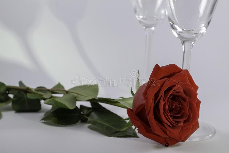 A fresh red rose big bud and petals with green leaves on white background and two champagne glasses shadow royalty free stock images