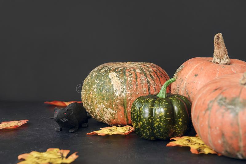 Fresh red round pumpkin on a black background, a black mouse, fallen yellow maple leaves, autumn royalty free stock images