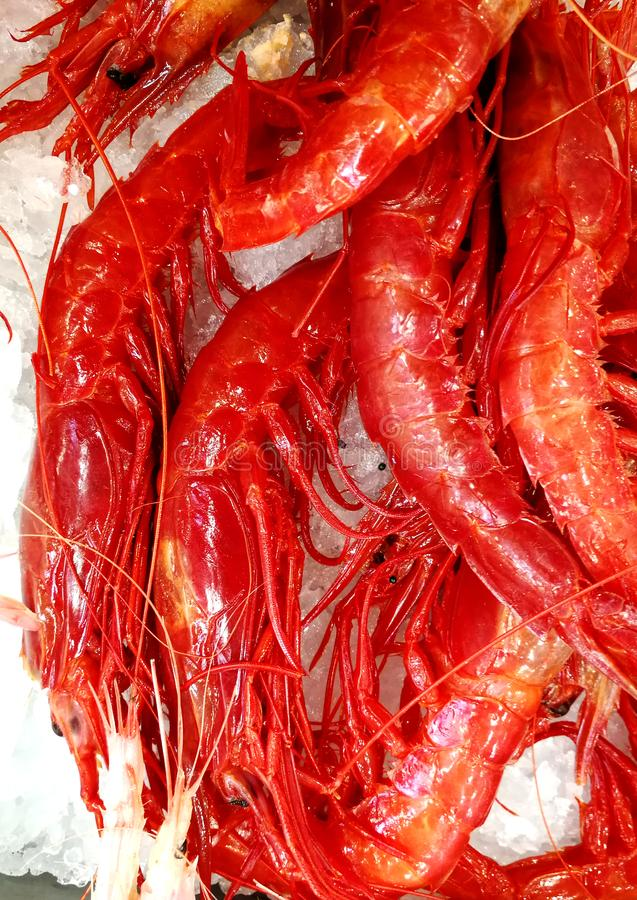 Fresh red shrimp at market stock image