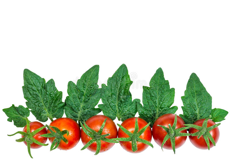 Fresh red tomatoes with leaves on white background royalty free stock image