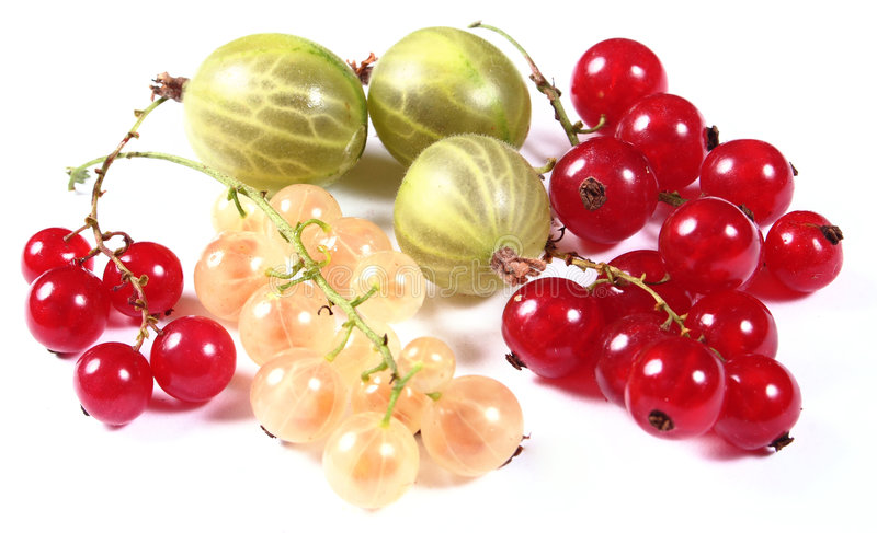 Fresh red, white currants and gooseberry royalty free stock image