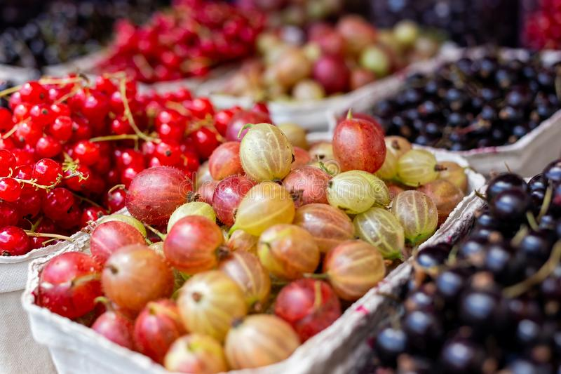 Fresh redcurrant, blackcurrant and gooseberries in paper trays a royalty free stock photos
