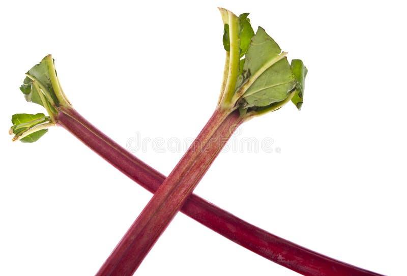 Fresh Rhubarb royalty free stock photos