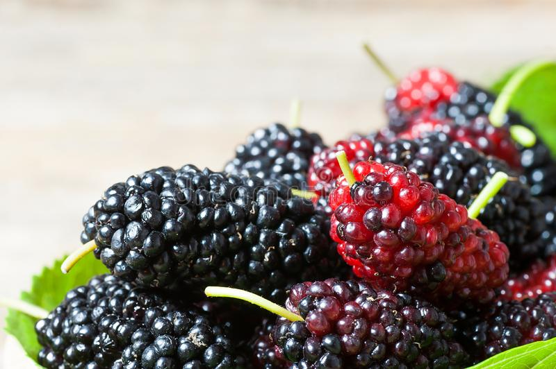 Fresh ripe black mulberry berry fruit on leaf background. Blackberry summer red fruits concept royalty free stock photography