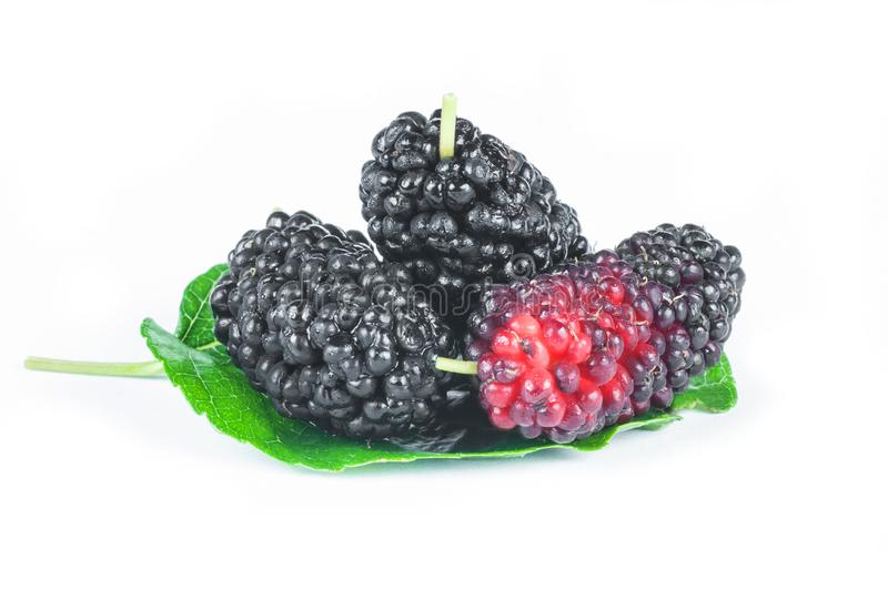 Fresh ripe black mulberry berry fruit with leaf isolated on white background. Blackberry summer red fruits concept royalty free stock photography