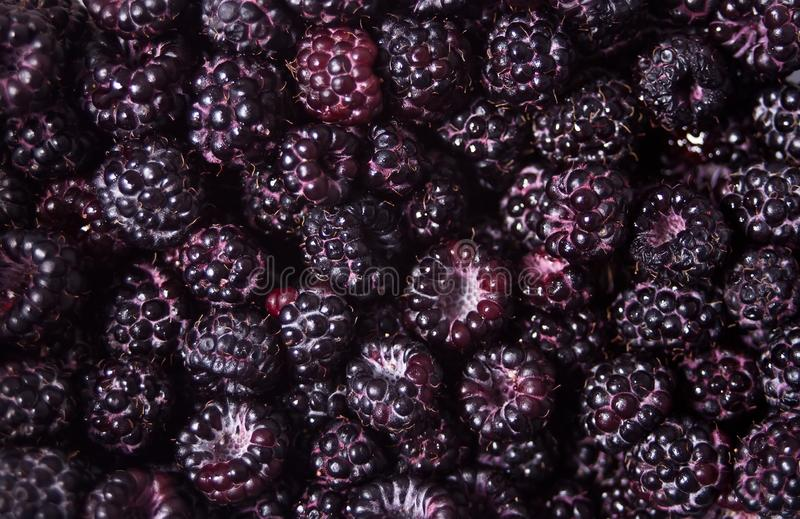 Fresh ripe blackberries as background. Texture pattern.  royalty free stock image