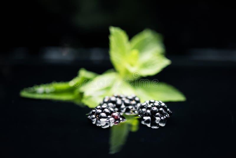 Fresh ripe blackberries in water stock photos