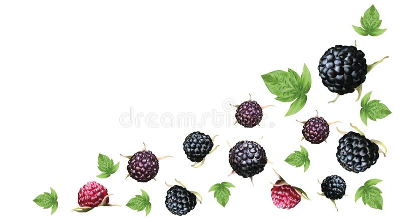 Fresh ripe blackberry with grren leaft isolated on white background. Summer berry closeup. 3D realistic black raspberry. With copy space for you text. Banner vector illustration