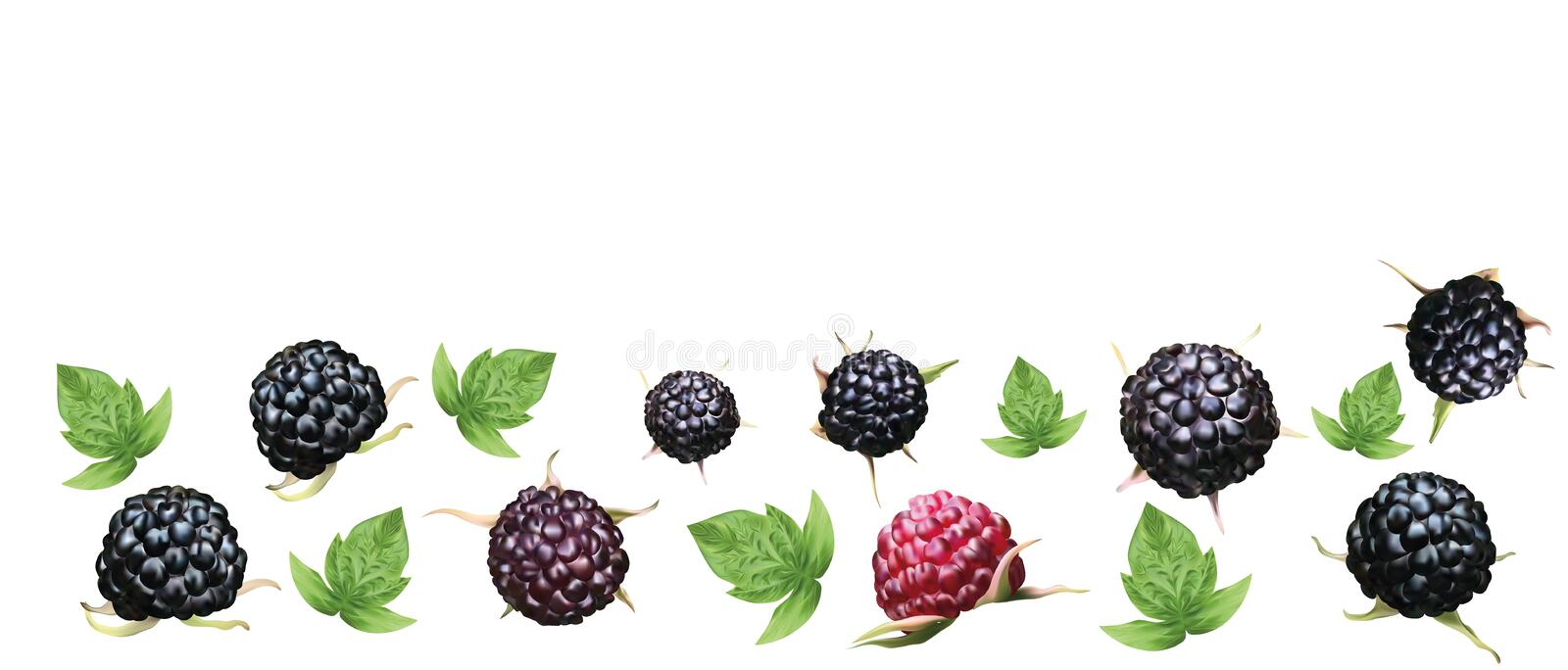 Fresh ripe blackberry with grren leaft isolated on white background. Summer berry closeup. 3D realistic black raspberry. With copy space for you text. Banner royalty free illustration