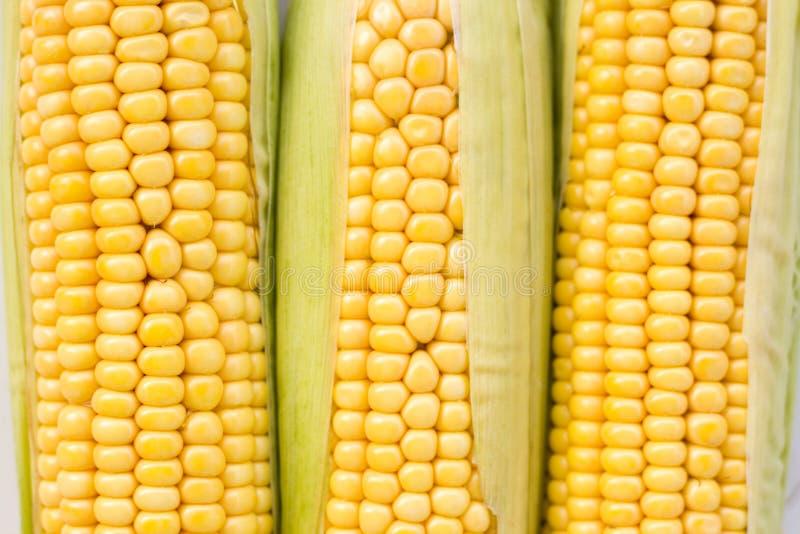 Fresh Ripe Corn Royalty Free Stock Photo