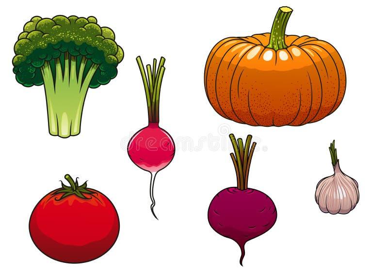 Fresh and ripe farm vegetables. Healthy ripe farm orange pumpkin, red tomato, green broccoli, pink radish, purple beet and garlic vegetables isolated on white royalty free illustration