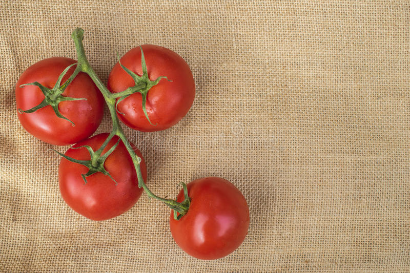 Fresh ripe healthy Vine Tomatoes on a hessian material. Viewed from above royalty free stock photo