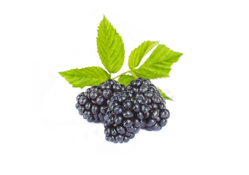 Fresh ripe juicy blackberry with leaves, organic sweet black berry with leaf, healthy dessert food, closeup, isolated on royalty free stock photo