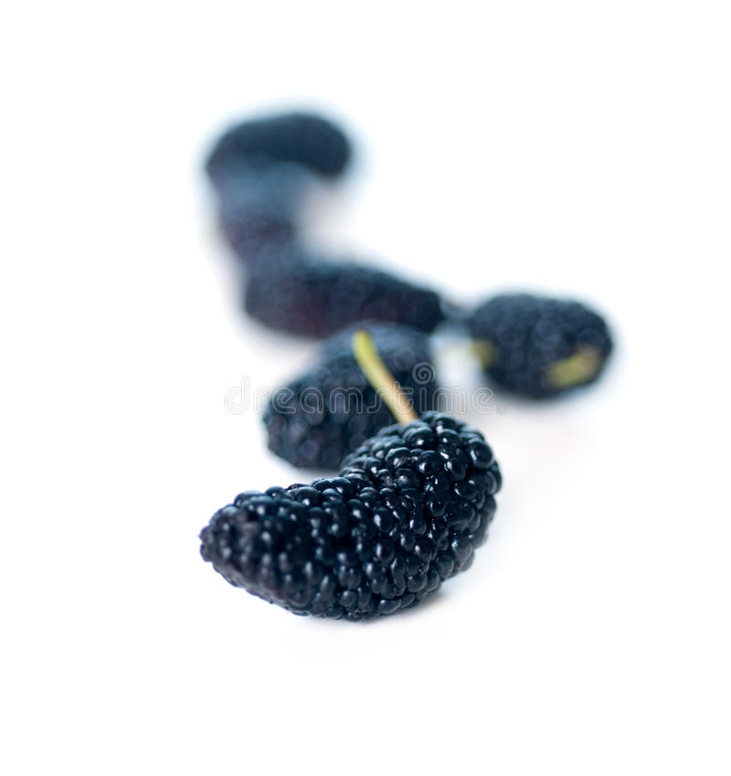 Fresh ripe mulberry over white stock images