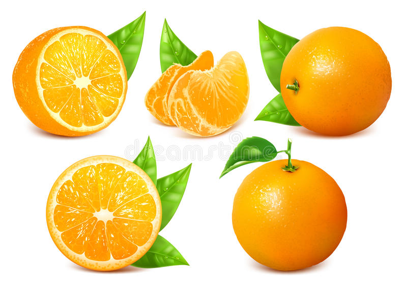 Fresh ripe oranges with leaves. Vector collection of fresh ripe oranges with leaves royalty free illustration