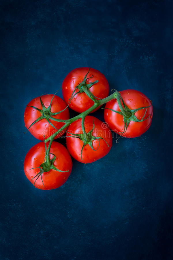 Fresh ripe organic tomatoes on a vine on dark blue background, styled food photography, copyspace, top view stock image