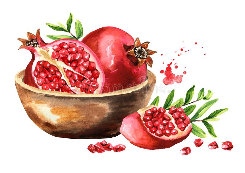 Fresh ripe pomegranate fruit in the bowl. Watercolor hand drawn illustration, isolated on white background stock illustration