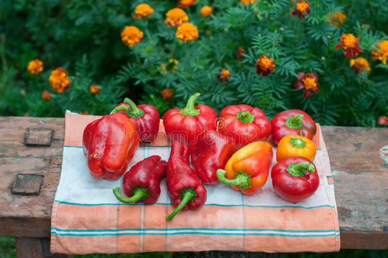 Fresh ripe red bell paprika peppers royalty free stock photography
