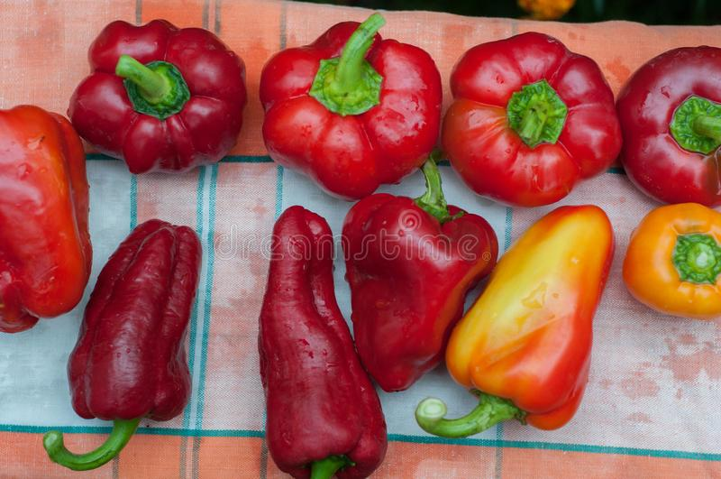 Fresh ripe red bell paprika peppers stock photo