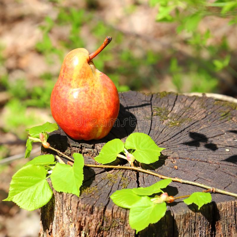 A fresh ripe red pear of the original form lies on a stump on a stock image